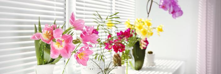 blog flores 705x305