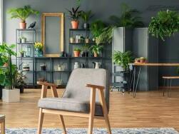 5 plantas de apartamento para você cultivar sem medo